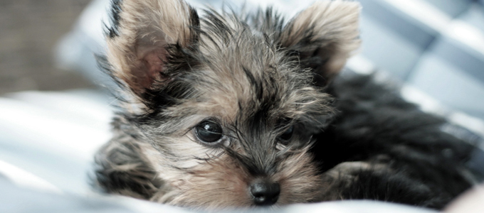 Tiny Paws Small Dog Rescue